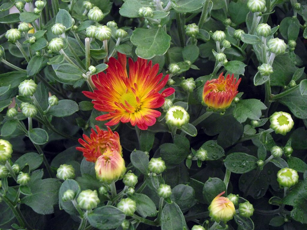 Annuals odonals nurseries what is an annual annual plants complete their life cycle in one year and usually do not survive a hard frost annuals provide opportunity to try something izmirmasajfo